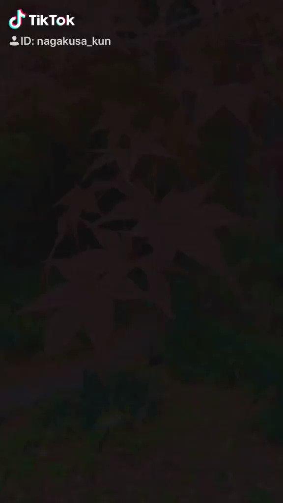 🌱長草くんTikTok更新🌟#東山動植物園 に遊びに行ったよ!すごく綺麗な日本庭園、紅葉に囲まれてぼくのからだもほんのり紅葉色です🍁👇👇TikTokで見る