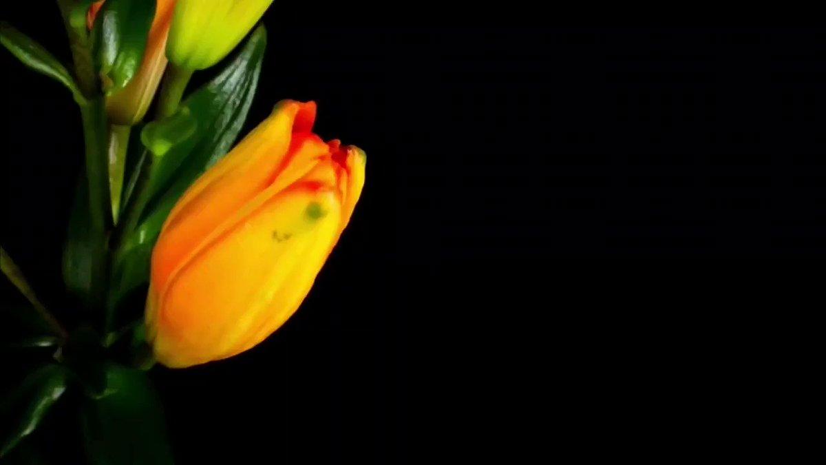 открытка с распускающимися цветами 9 цветов советы помогут вам