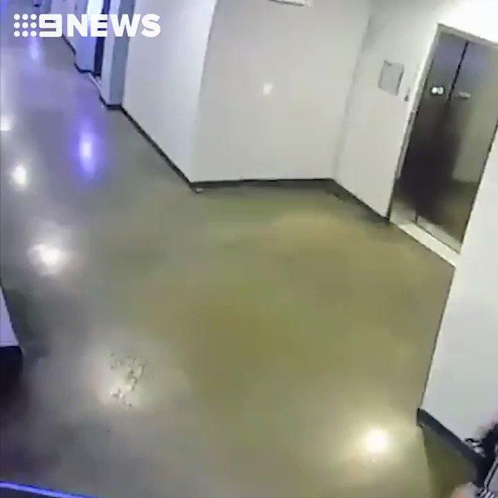 米ヒューストンでリードがエレベーターに挟まれたまま上がっていきかけたポメラニアンを男性が助けた。男性(ジョニー・マティスさん)は「犬がかわいかったのですれ違いながら見ていた」ので気づいて、「必死に首輪を外した」と言う。飼い主はドアが閉まった途端に