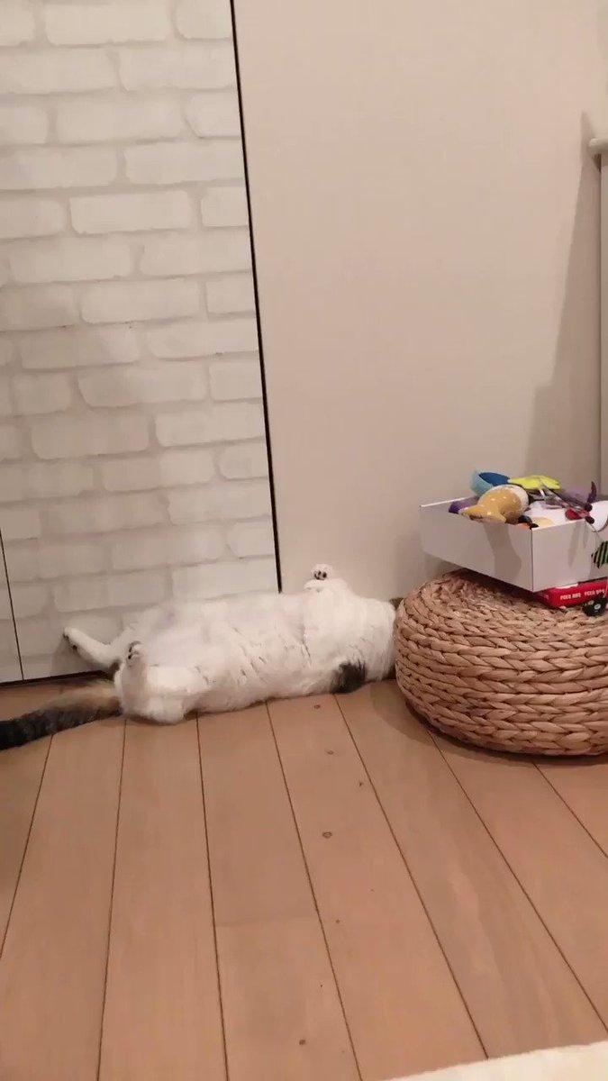 君はさっきからそこでいったいを何をやっているのだね?