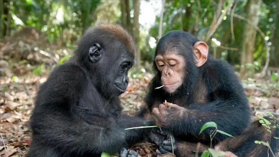 本日は地声と高音ボイスがかけ離れすぎていると定評のある猿ターテイナー🙈さんにお越しいただきましたwwwセプテンバー調子はどうだい?おはよう こんにちは おやすみ地声草と低音と高音と低音#アカペラ#TikTok#調子に乗る猿