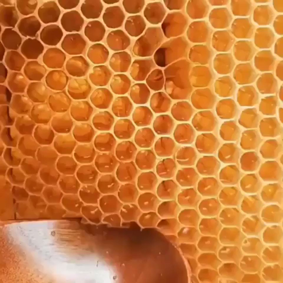 Replying to @Havenlust: Extracting honey 😍
