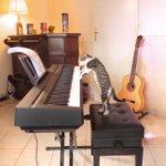 ピアノを弾く猫がすごい!只者ではないから見てみて!