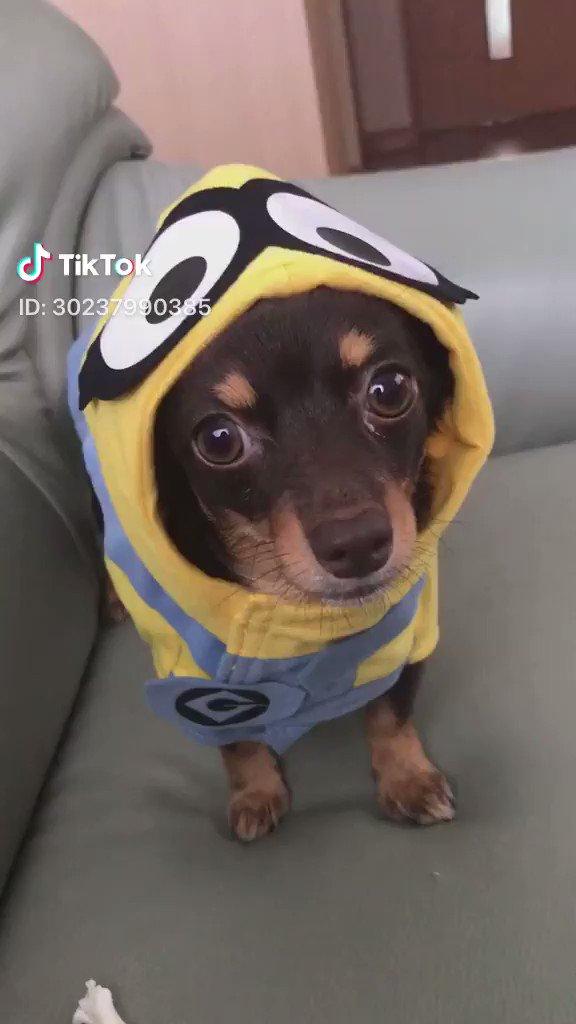 犬の気持ち(音量オン推奨)📸 Yuina@30237990385(TikTok)