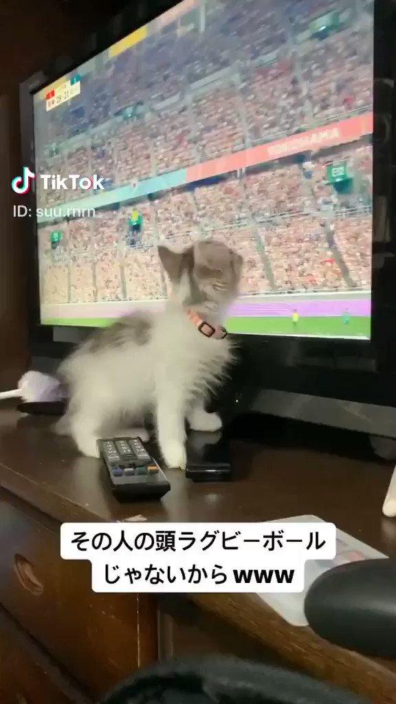 子猫が捕まえたラグビーボールとは…📸 suu.rnrn (TikTok)