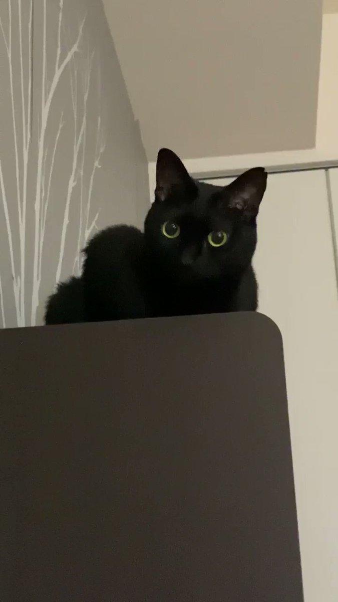 猫(こいつ…絶対起きてるよな…でも昨日遅くまで仕事してたし、鳴いて起こすのもな…でも腹減ったしな…)実際に出た声「ぽ、ぽぽぉ…」