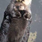 【もふもふぎゅっ】水の上で抱き合うラッコの親子が愛おしくて話題沸騰中