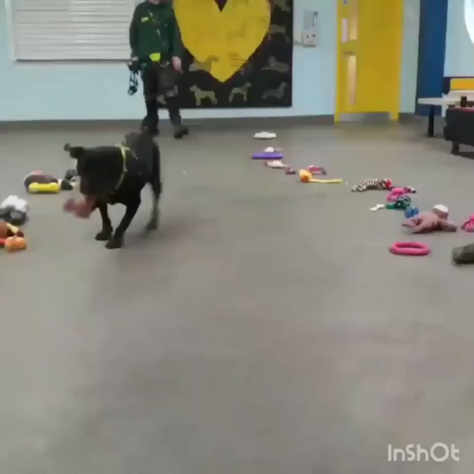 Dogs at the shelter choosing their Christmas toy. Go to your shelter and adopt one tomorrow.
