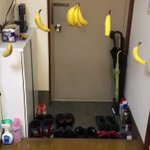 スーパーで購入したバナナを玄関で吊るした結果?ドンキーコングのステージが出来上がる!