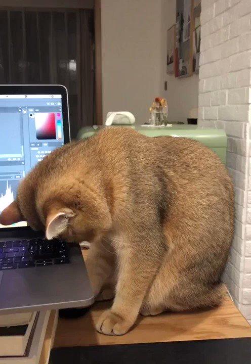 「遅くまで仕事してたら猫がこうなった」