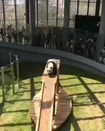 หากชาติหน้ามีจีง ขอเกิดมาเป็นหมีแพนด้า