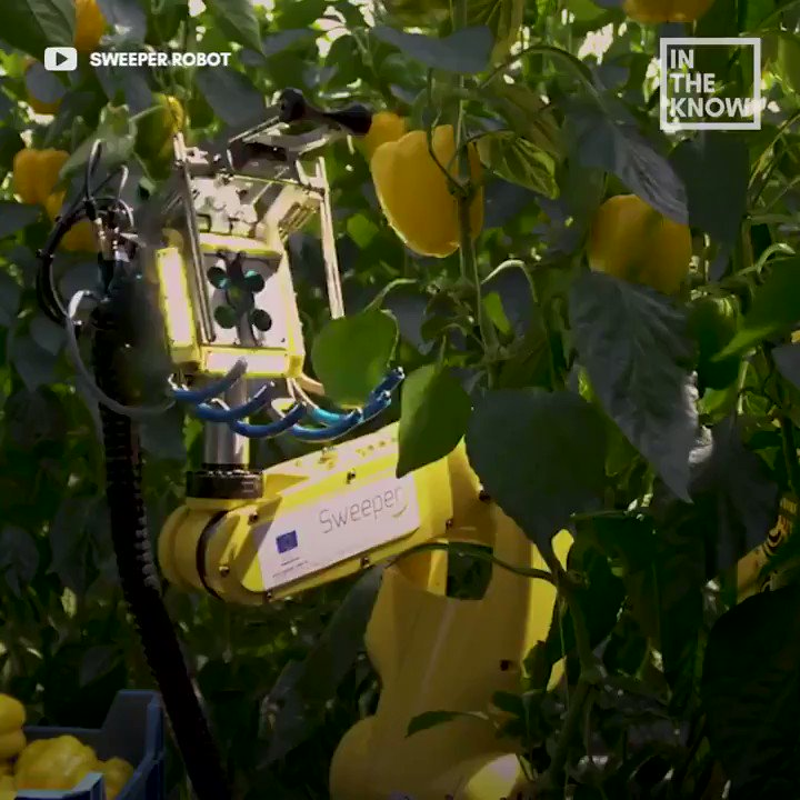 This #robot picking veggies for #farmers in 2020 and beyond >>> via @MikeQuindazzi >>> #agritech #robotics #mpgvip #automation #iot #ai #industry40 #4ir #agribusiness >>> Video cc @alvinfoo @SpirosMargaris @YuHelenYu @Fisher85M @helene_wpli @HaroldSinnott @kalydeoo @FrRonconi https://t.co/WG2agEbXUa
