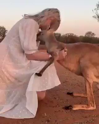 Kangaroo can't stop hugging the volunteer who saved her life