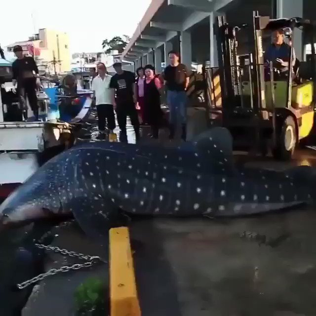 I am so happy to see that these people did their best to help the shark get back in the water!