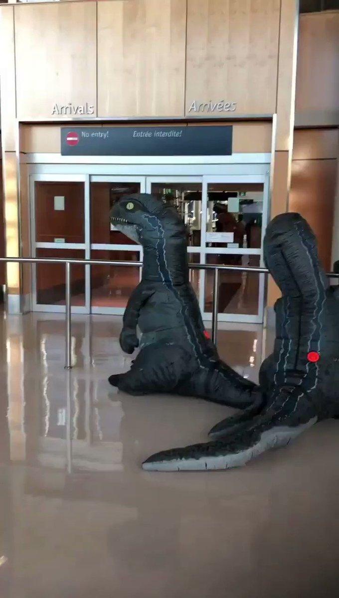 孫たちがティラノサウルスのコスチュームを来て驚かそうとしているという情報を事前に察知していた入念なおばあちゃんの対応、素敵。