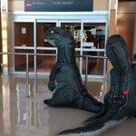 孫が恐竜の格好でおばあちゃんを待っていた結果?おばあちゃんも恐竜の格好で出てきた!