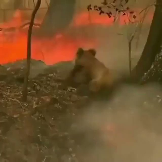 It breaks my heart to see the devastation the Australian bushfires are causing to people and animals across the country. I'm pledging $500k to support the animals, wildlife volunteers and rural fire services. If you are able to, and you haven't already then you can donate too.
