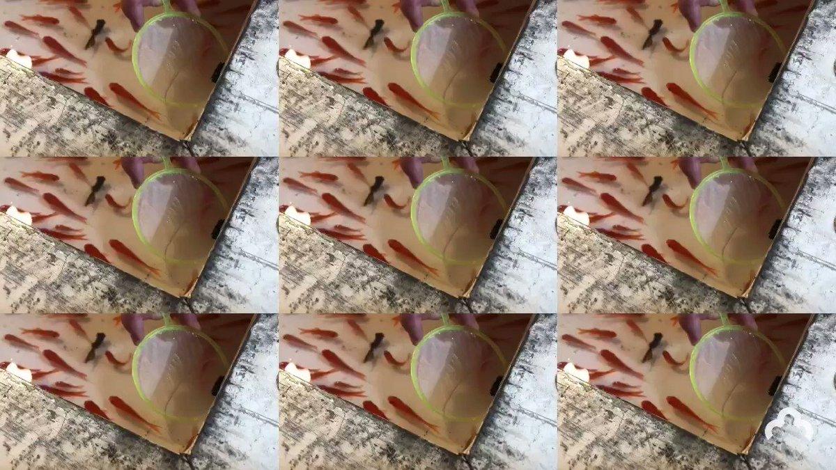 【 #今日のムビート 】十日戎でムビート🏮昨日は本宮で本当に人多すぎて参拝出来ませんでした😂#ムビート #アプリ #動画 #編集 #動画編集 #音楽 #加工 #簡単 #映え #おもしろ #vj #djiOS Android