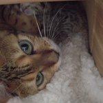 子猫を生んでママになりました!とても可愛いので見て下さい!