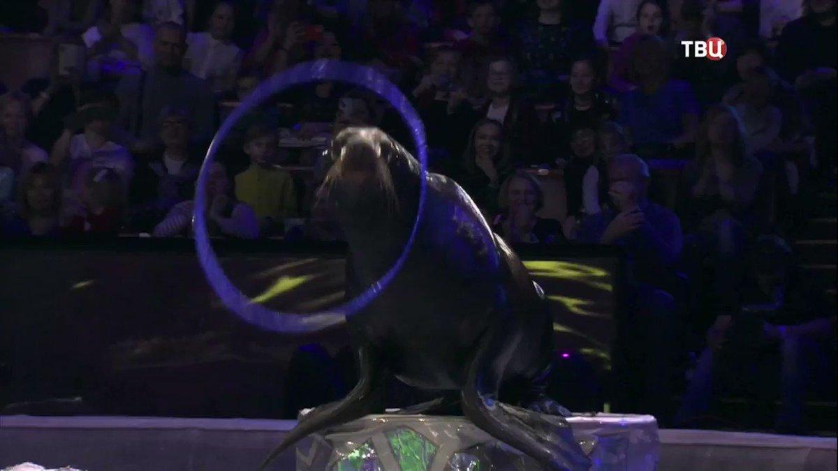 конечно, актеры цирка на вернадского фото уже