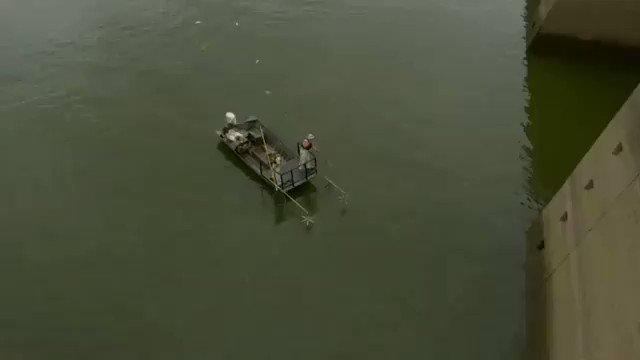 増えすぎた外来魚を電気ショックで一網打尽に