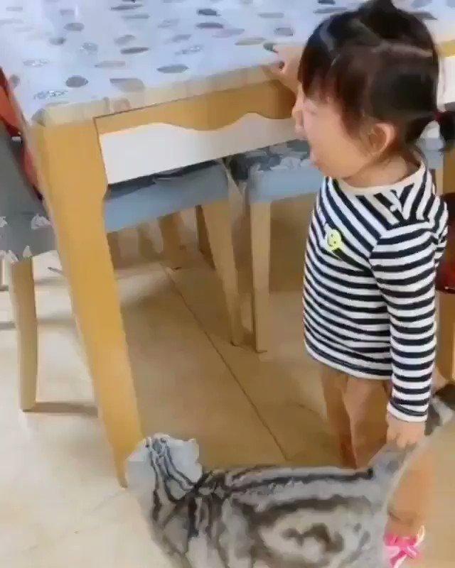泣き止まらせる猫ちゃん偉い