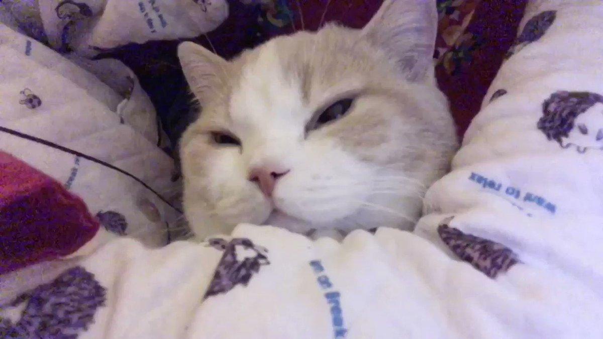 寝ようと思ったら布団の中に入ってきた
