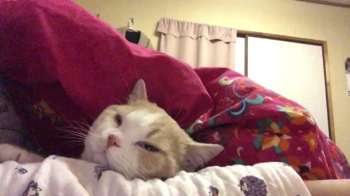 布団の中に入ってきて腕枕で寝るみたい