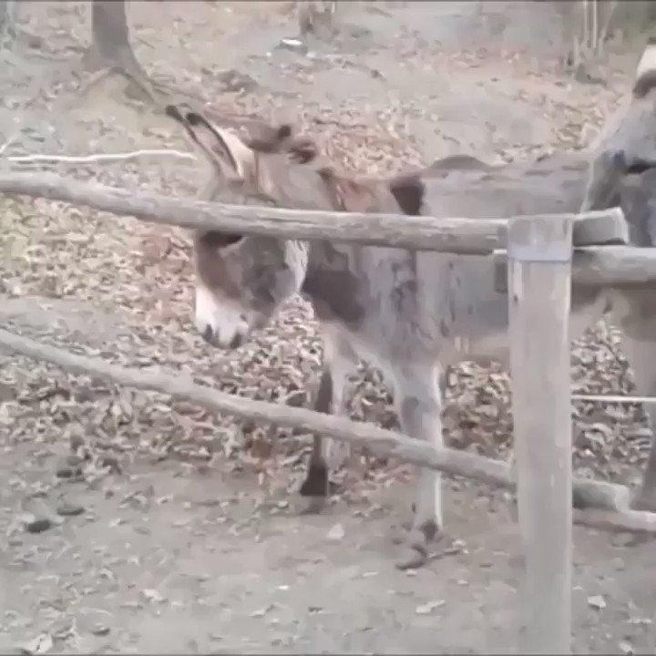 Clever ass!