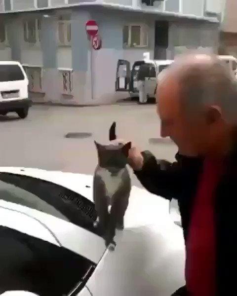 沢山なでて欲しい可愛い猫ちゃん