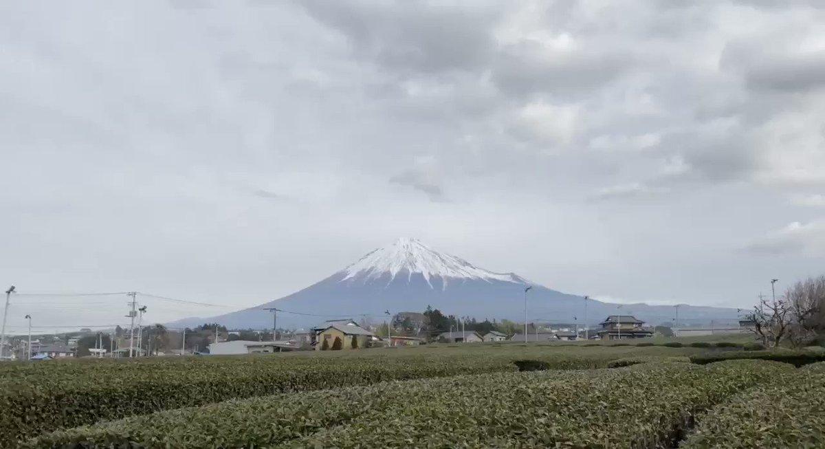 皆さん♬あらためておはようございます😊早朝は☁️曇っていて視界の良くない状態でしたが、先ほど富士山が🗻姿を見せてくれましたので「ケサフジ」🗻👱♀️茶畑動画版🌱お届けしますヾ(๑╹◡╹)ノ