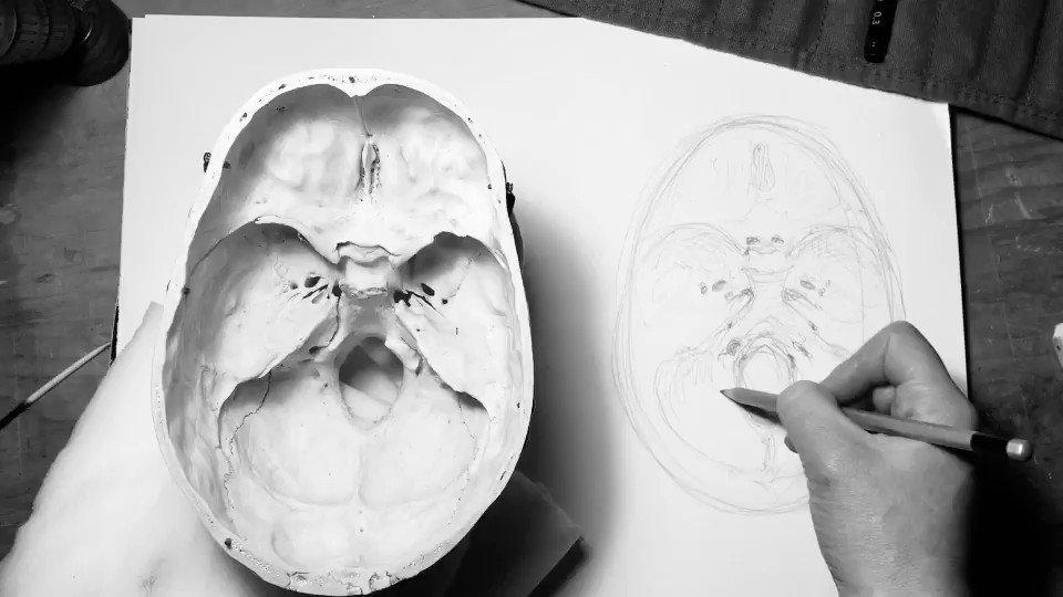 Drawing foramina last night...