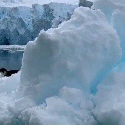 Los glaciares aparentemente no tiene color. Sólo vemos el color de la luz que refleja dependiendo de su grosor.  #NewYork #USA #FlashbackFriday #FelizViernesATodos #fridaymorning #FridaysForFuture #FridayThoughts #nature #climate #Wild #Glacier