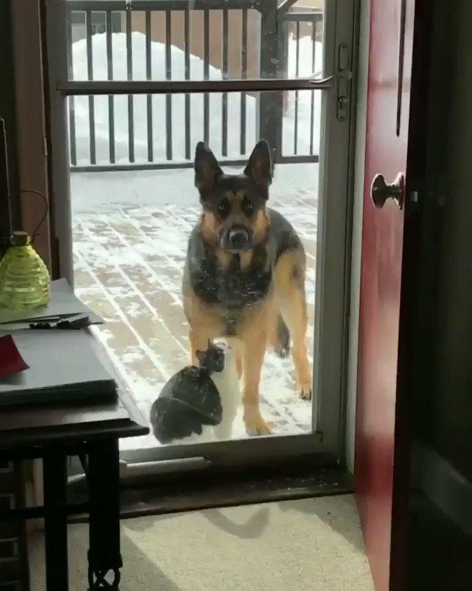 イヌ「おい…今いちゃつくなよ…」Dude...not now..  ネコめっちゃ可愛いし、イヌめっちゃイケメンだし、もうどうしたらいいのよこれ…