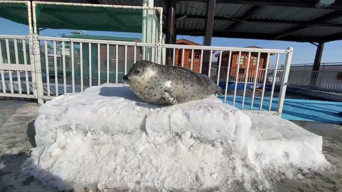 広場に氷を並べて、雪をその上に乗せて台を作りました😁溶けてしまうまでの期間限定ですが(笑)日和ちゃんも台の上に乗って飛行機ぶーん✈️✈️