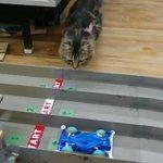 ミニ四駆サーキットの最大の難関?猫が一番手強い!