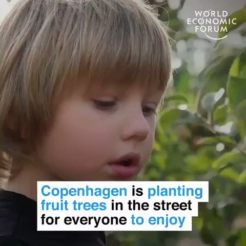 #Copenhagen is planting fruit trees in streets so everyone can enjoy fresh fruit.  In #Ottawa, fruit #trees are being planted to support local food banks. #Adelaide is considering a similar plan to help the homeless.   We have the solutions. Implement them.  #GreenNewDeal