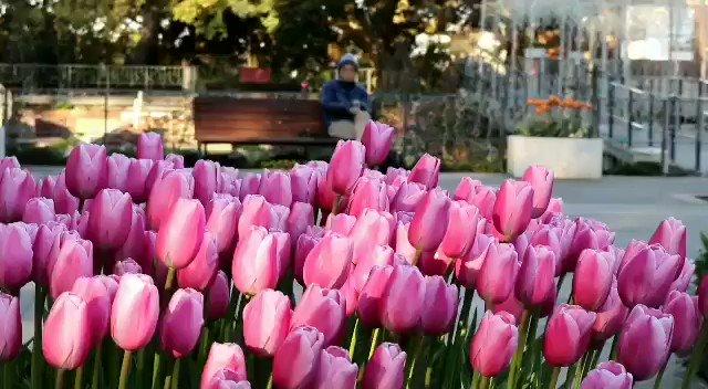 おはようございます🌄優しさいっぱい#ありがとう今日は青空になりそう💙お日様はありがたいです🌞心もぽかぽかになれるよーに🤗🌷💓#アイスチューリップ🌷の動画を送りますね❤️春のお花🌷が今見られるなんて。。幸せです🌺🍃ふんわり暖かい心になってね🎈今週もよろしくね😃🍒