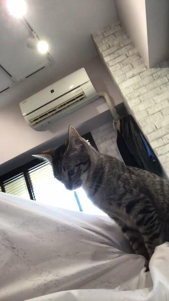 六本木にある美容室にて。3匹の猫が膝のりしてくる癒しの時間で出張の締めくくり🎵