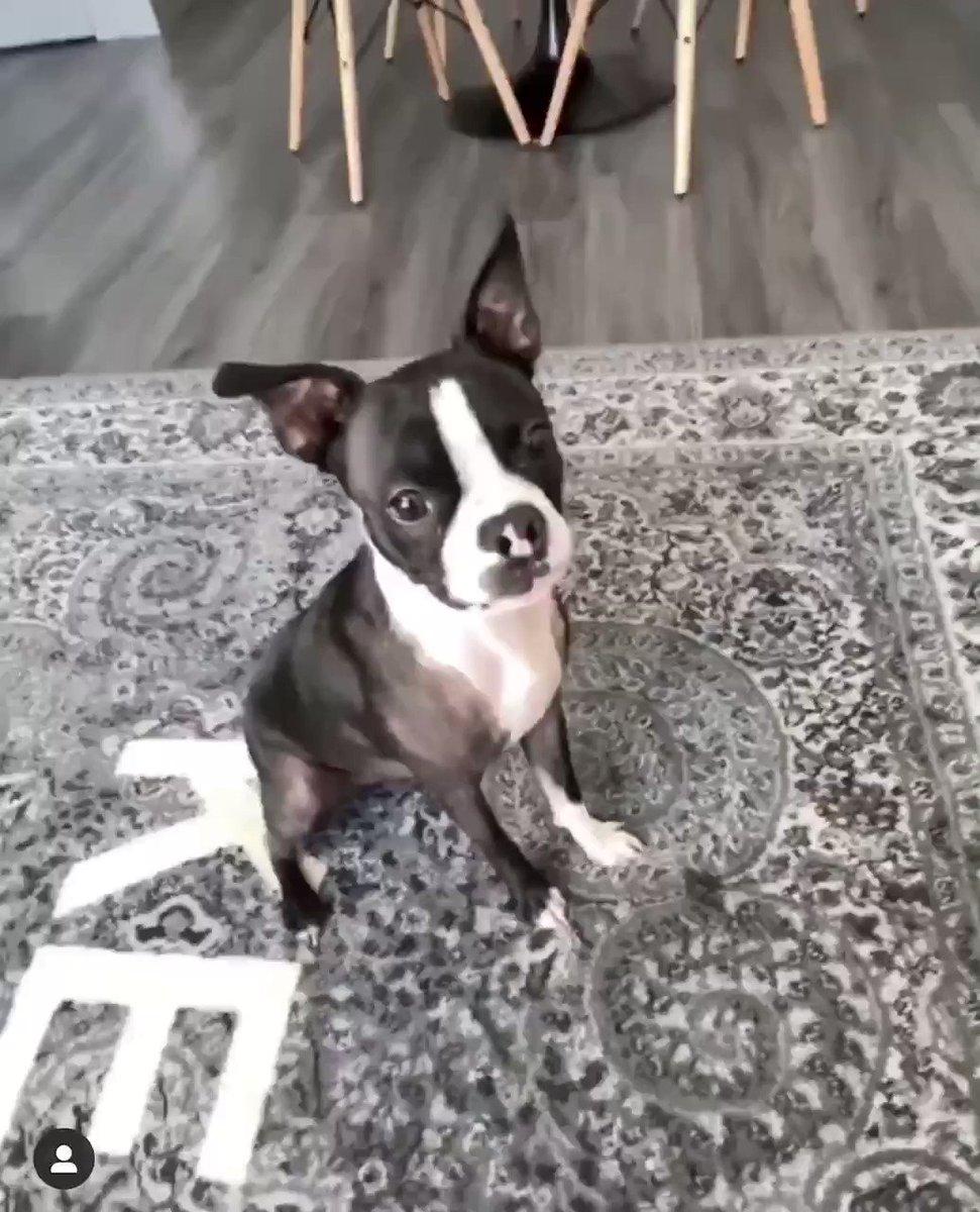 犬の仕返し草