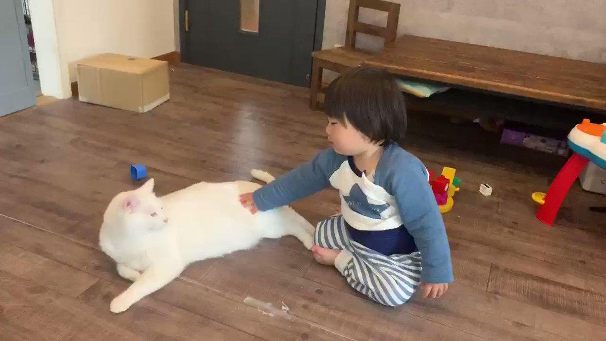 息子にはずっと優しく優しくって猫の触り方教え続けてきたけど、優しくする事が出来る様になった時は嬉しかったな。子供の成長に動物との触れ合いってすごく大切だよね☺️