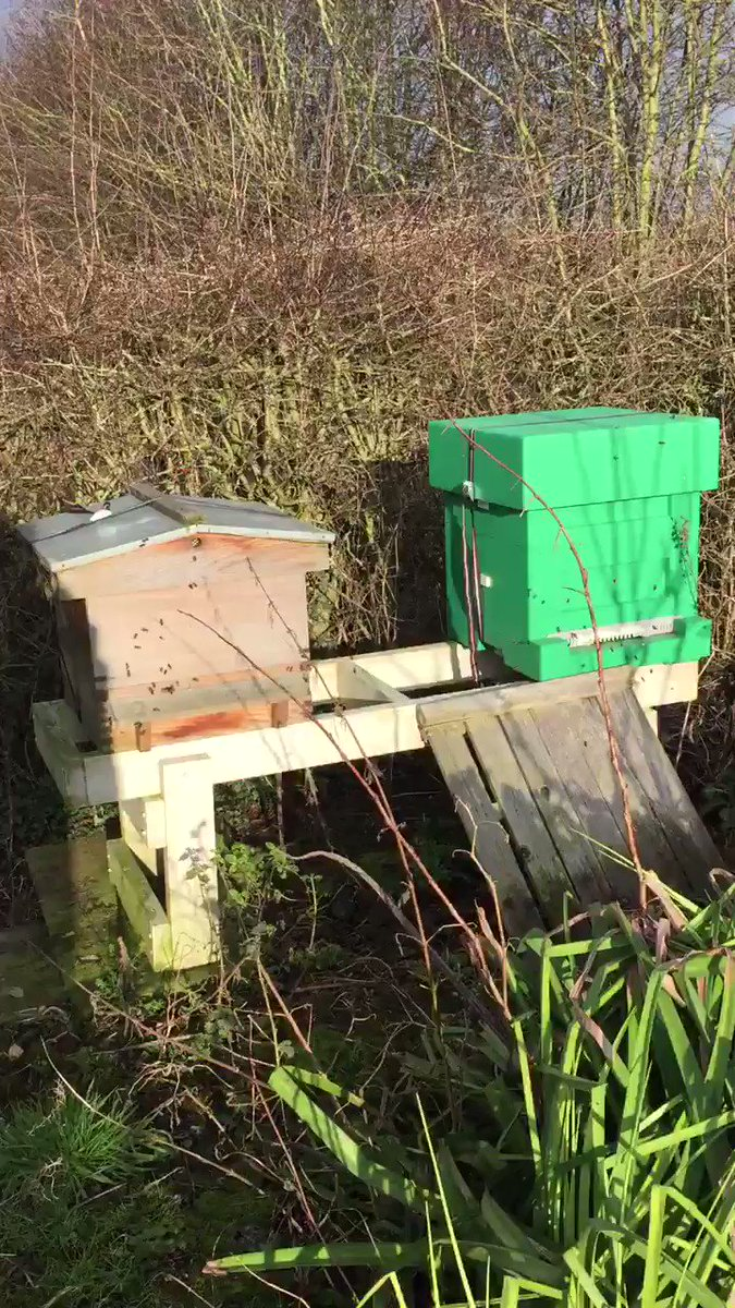The bees are busy in the sunshine ☀️