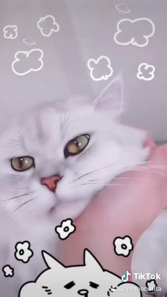 毎日かわいい。゚(゚´Д`゚)゚。✨✨✨✨✨✨✨✨✨✨✨✨#みーむーびー#みーたそ#なりまぽ#毎日かわいい#tiktok