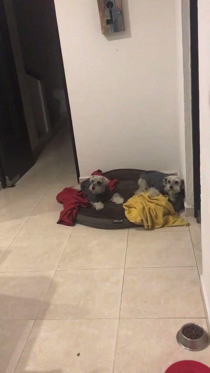 La hora de las medicinas de mis perros, a uno le encanta y para el otro es un suplicio Si son muy perceptivos identificarán a cada uno