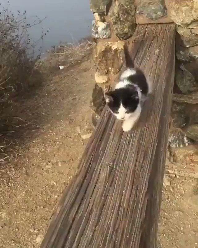 散歩をする子猫ちゃん