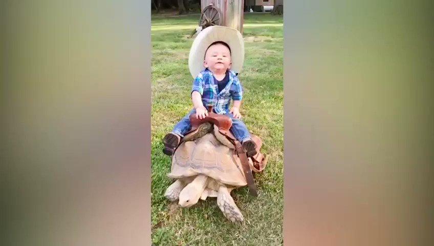 Bark bark bark.   I need a dog horse 🐾🐾🐕🐎 this kid knows my struggle 🤫.    #dogs #animals #pets #cute #babies #cowboy #funny #friends #ROFL