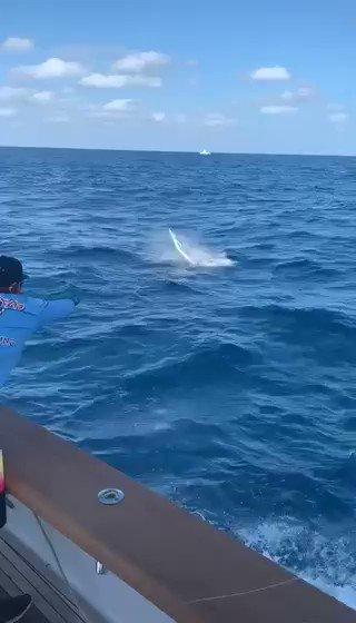 Isla Mujeres, MX -  Poor Girl went 9-14 on Sailfish.