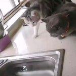二匹の猫と魚の画像がカワイイ!元気のない人はぜひ見てみて!