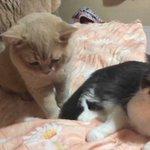就寝時間になると、いつも猫ちゃん達がベッドに集まってくる!