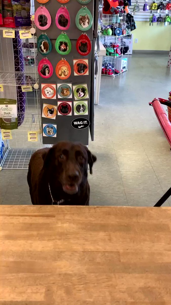 Nothing gets the paws dancing quite like a couple of treats! #shoplocal #shopsmall #dogs #lakemary #florida #louisespetconnection #tapdancer